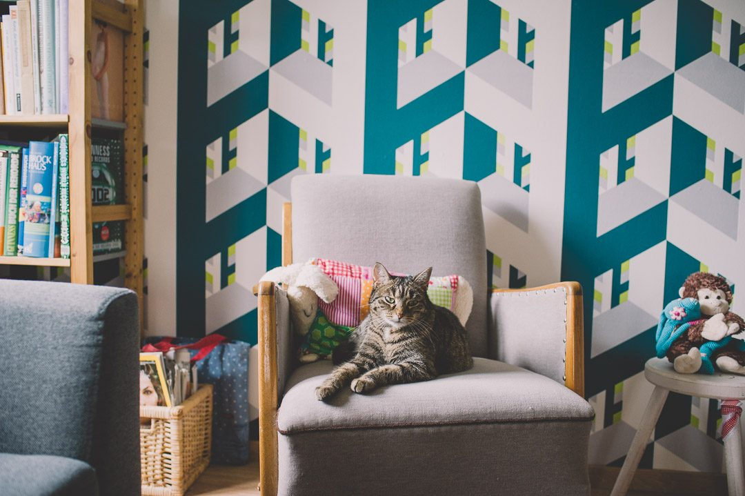 Katze zuhause auf Sessel
