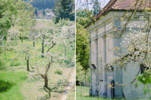 Kloster Holzen Allmannshofen Apfelbaumblüte