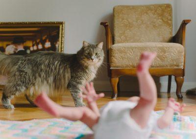Katze während Babybilder Fotoshooting