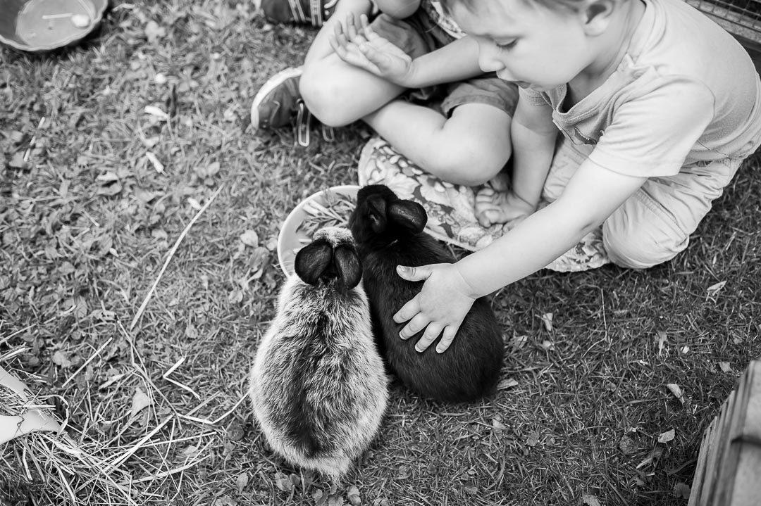 Kinderfreundliche Hasen als Haustiere